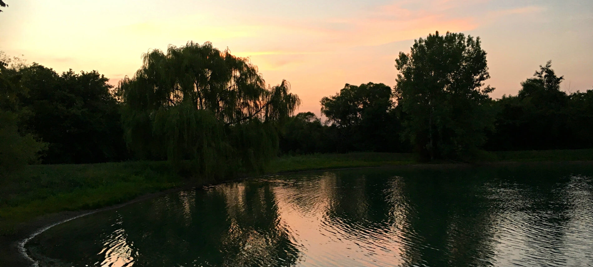 The calm pond surrounded by green lawn and trees at sunset with pink and yellow tinted sky