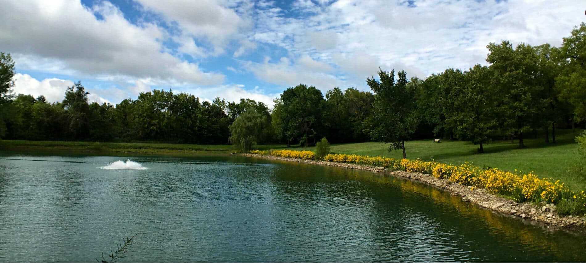 Pond surrounded by yellow flowering shrubs, green lawn, dark green trees, and blue skies with white clouds